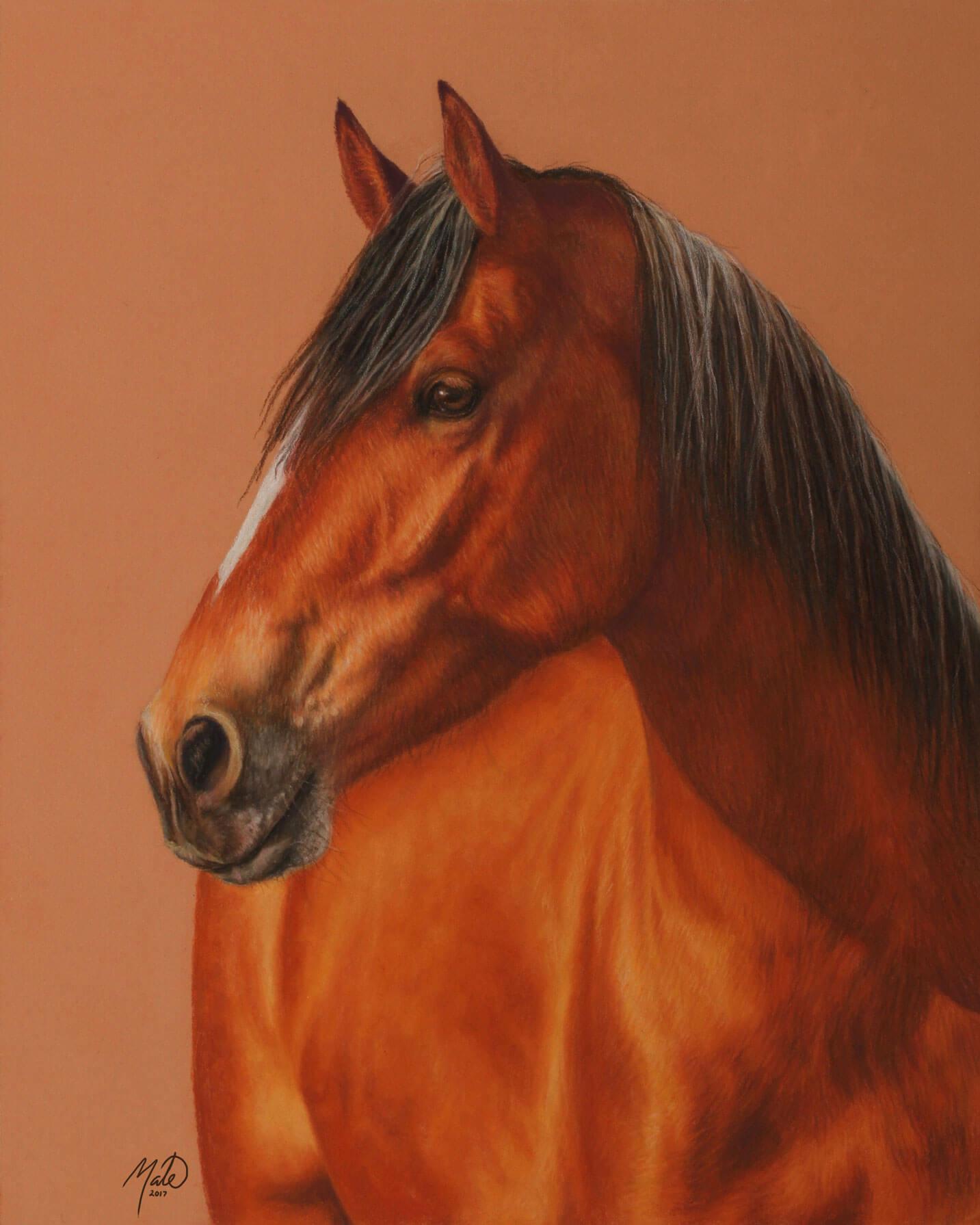 Pastel tegning af hesten Primo