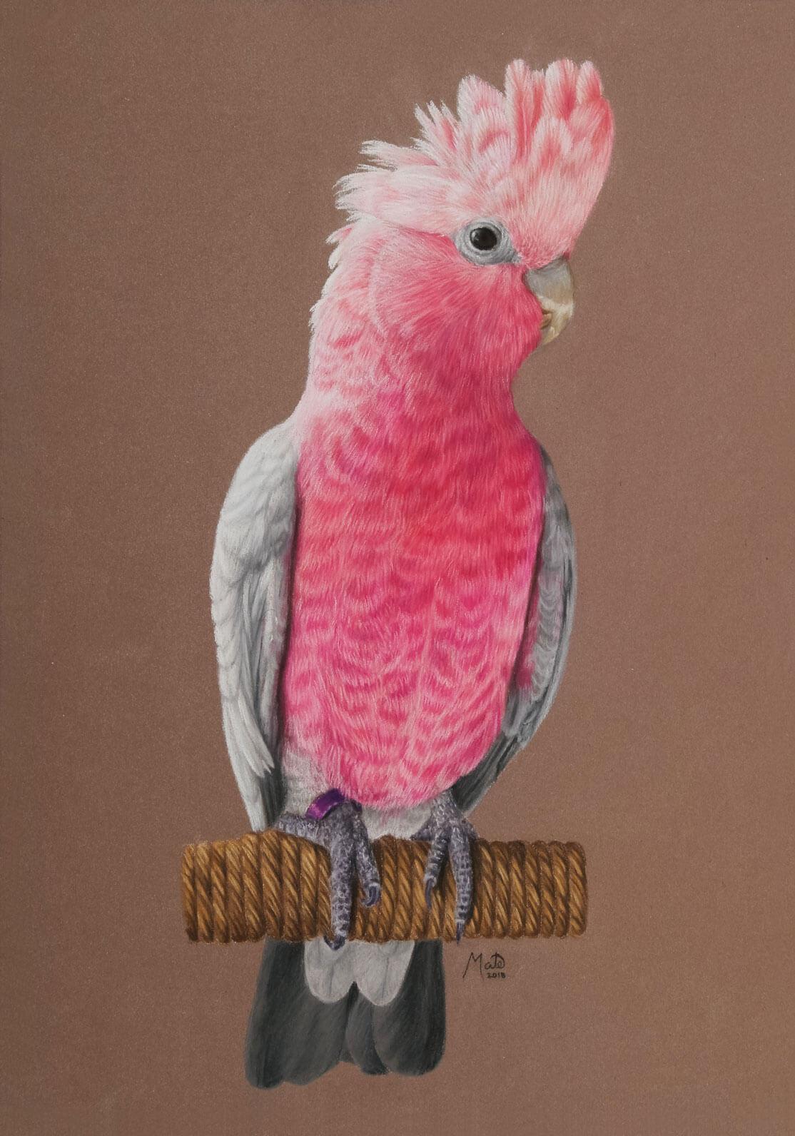 Pastel tegning af pink fugl