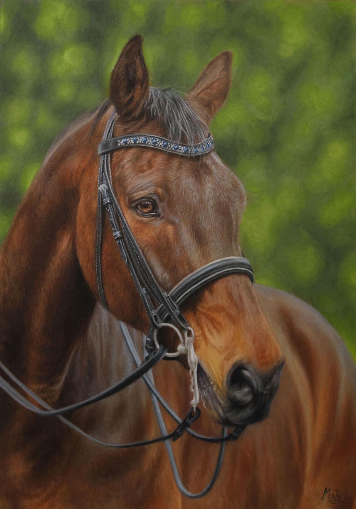 Pastel tegning af hesten Saffier